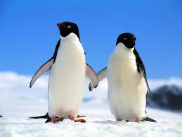 Penguins_0