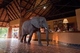The Mfuwe Lodge in Zambia