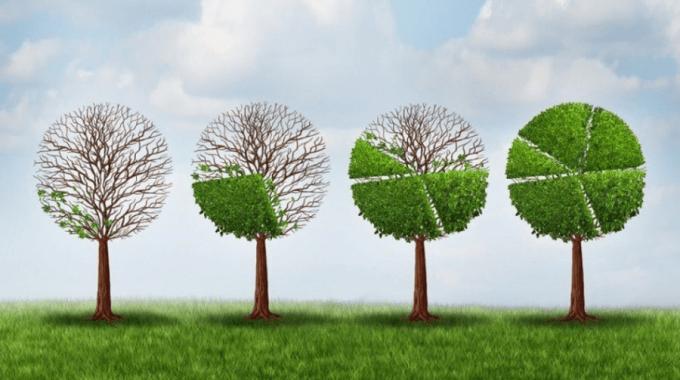 Tree Growth image_2