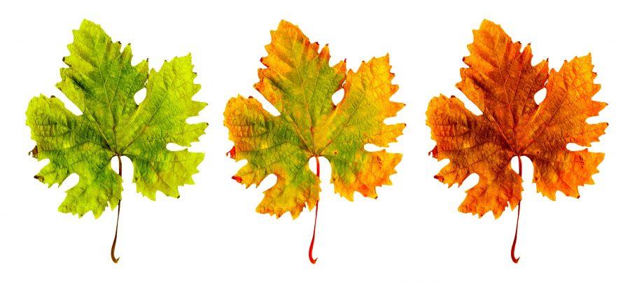 leaves_0