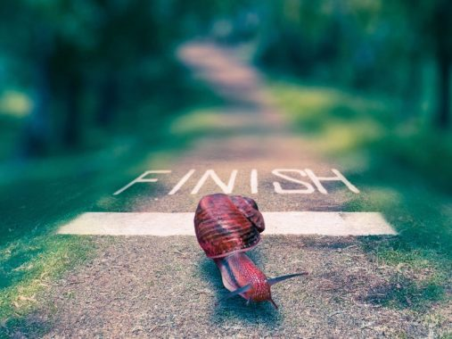 snail-finish